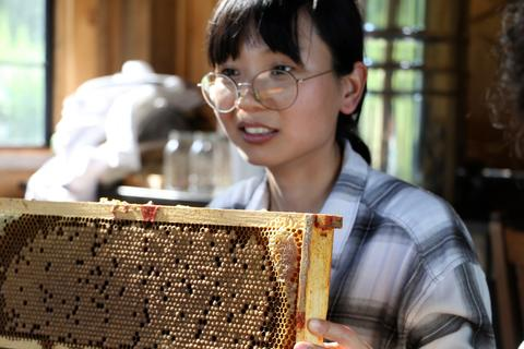 Tongqing Li, Post-doctoral Associate in the Klein Lab, examines a beehive frame