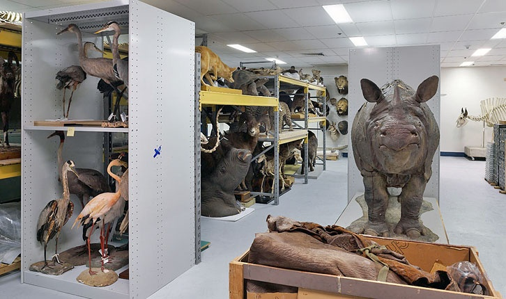 Zoology Room of the Peabody Museum of Natural History.